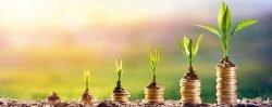 Pflanze wächst auf Geldmünzen