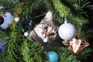 Katze sitzt im Weihnachtsbaum Kugeln
