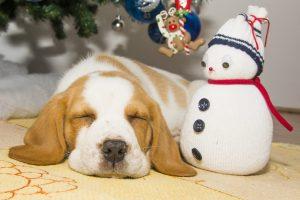 Hund unterm Weihnachtsbaum mit Schneemann