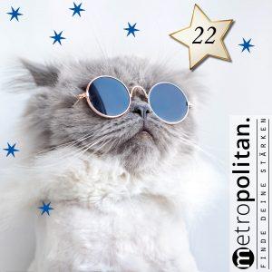 Adventskalender Nummer 22 Katze für Allergiker Katze mit Brille