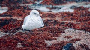 Küstenvogel am Strand Nachhaltigkeit im Online-Marketing